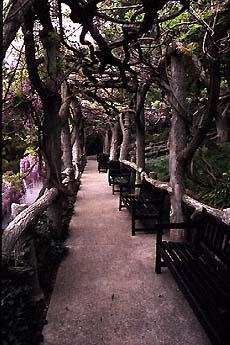 Gardens in san marino california one of the finest public gardens